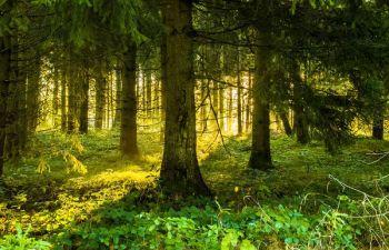 Mieszkania Plus kosztem polskich lasów?