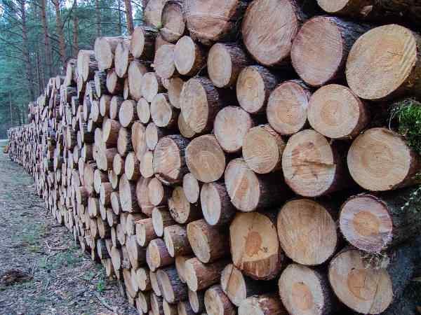 Deweloper nie wytnie drzew na potrzeby inwestycji