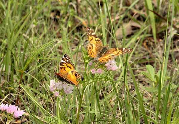 """Otwarto """"Ogród motyli"""" na Zabłociu"""