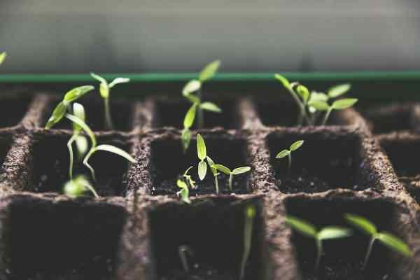 Dom-ogród będzie żył w przestrzeni miejskiej