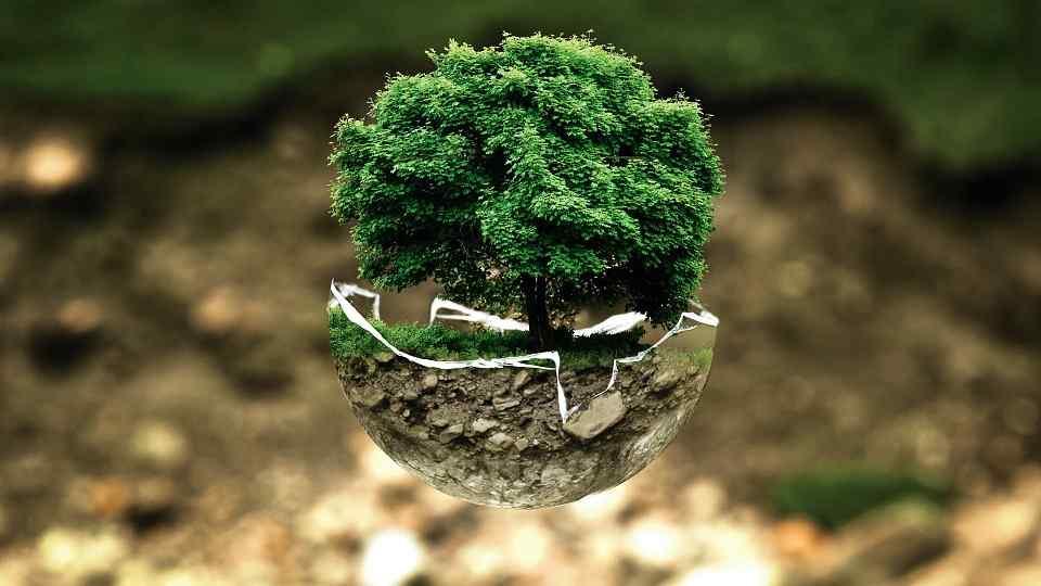 Polska popiera zieloną transformację