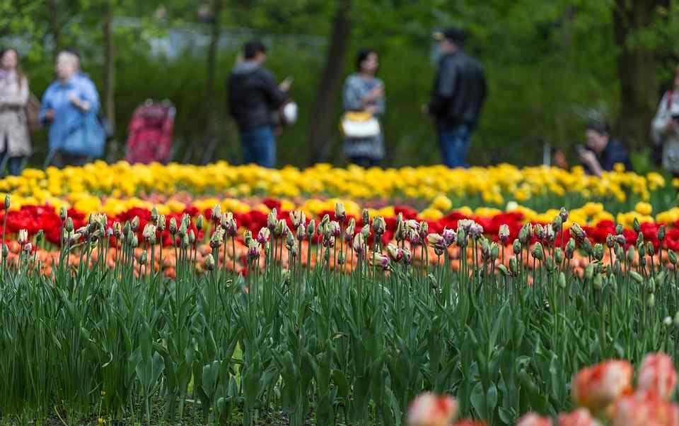 Ogrody Krakowian najlepsze w Europie