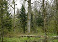 Mieszkaniec Piszu bezprawnie wyciął drzewa sąsiada