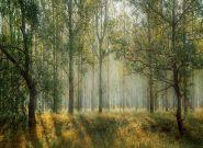 Kryzys klimatyczny uderzy w Polskę