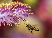 Gminy pomagają pszczołom
