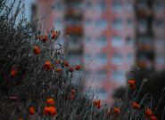 Miasta opracowują własne Mieszkanie Plus