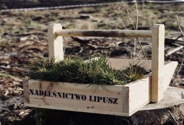 """Druga edycja akcji """"Do nasadzenia"""" za nami. Przybyło 90 tys. nowych drzew"""