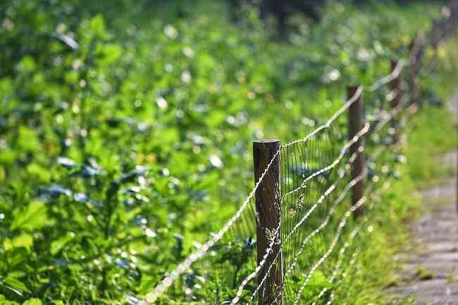 Rozgraniczenie  nieruchomości  i  odnowienie  granic