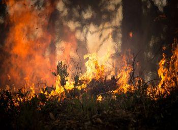 Gospodarka zabija naturę. Amazonia płonie