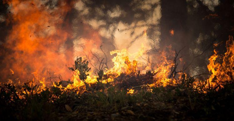 Pożary lasów w Puszczy Amazońskiej