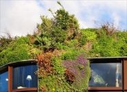 Miejskie lasy na dachach