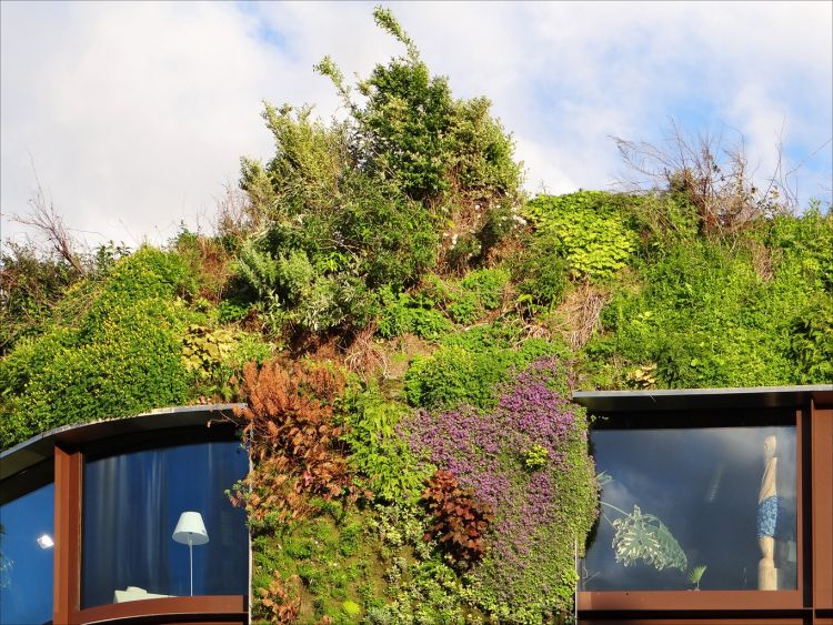 Kraków proponuje ułatwienia w realizacji zielonych dachów