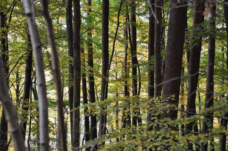 Największą popularnością w ostatnim roku cieszyły się działki leśne.