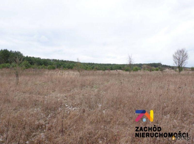 Działka Dąbrowa 10 000.00m2, działka na sprzedaż