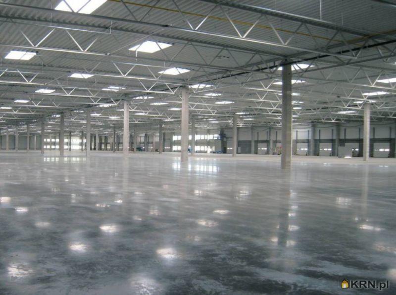 Lokal użytkowy Białuty 1 200.00m2, hale i magazyny do wynajęcia